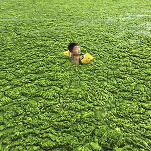 Boy Swims In Algae-filled Water, Qingdao, Shandong