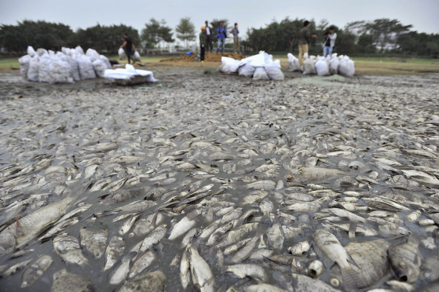 Workers Collect Dead Fish At A Park In Shenzhen, Guangdong Province
