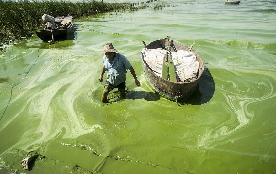 Fisherman Covered In Algae, Chaohu Lake