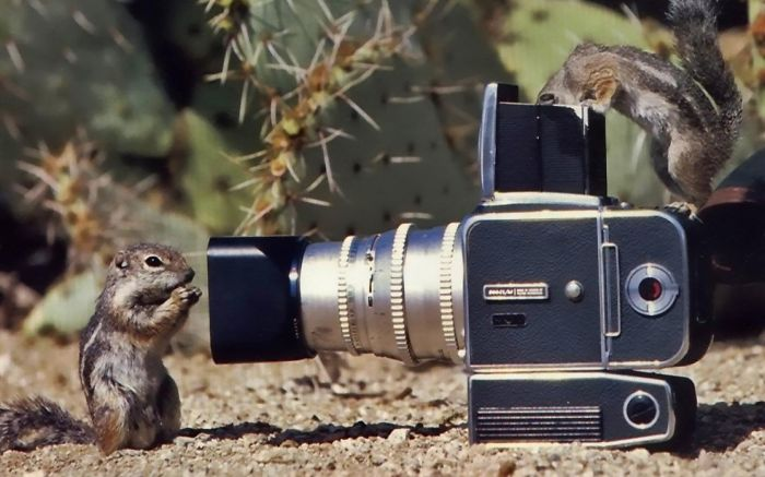 Chipmunks Interested In Camera