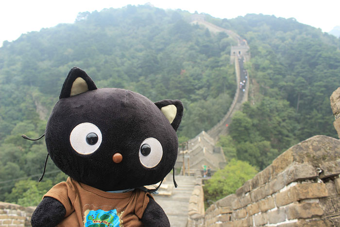 Meet Choco Cat: The Most Well-Traveled Kitty With His Own Passpurr