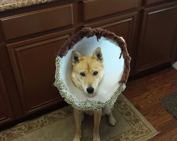Winter Cone Of Shame