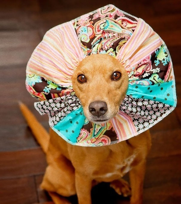 Crafted Cone Of Shame