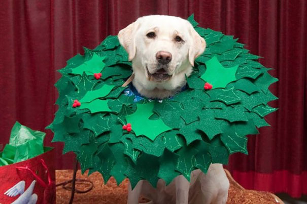 Christmas Cone Of Shame