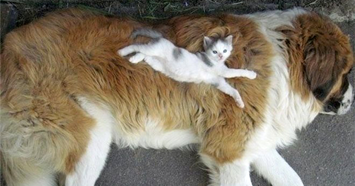 Puppy And Kitten Sleeping 21+ Cats Who Us...