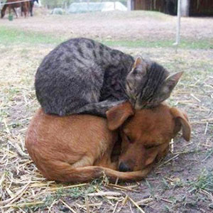 21+ Cats Who Use Dogs As Pillows