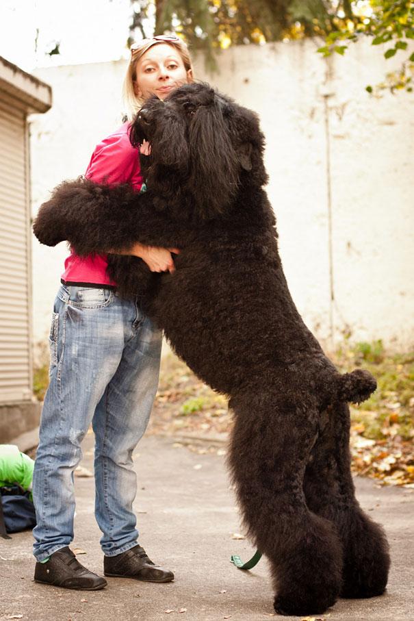 http://static.boredpanda.com/blog/wp-content/uploads/2015/01/cute-dogs-hugging-humans-8__605.jpg