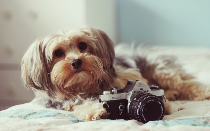 Smile. Dog Is Taking Picture