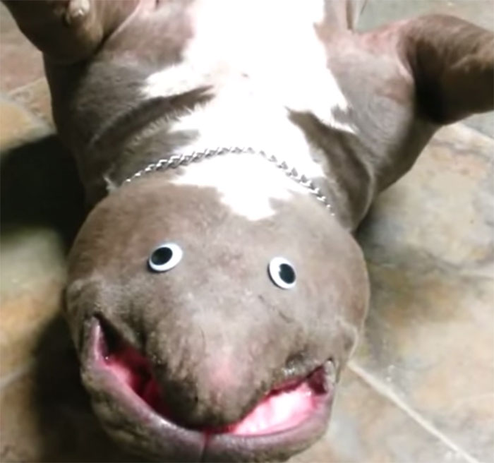 dog-creature-unseen-goggly-eyes-3