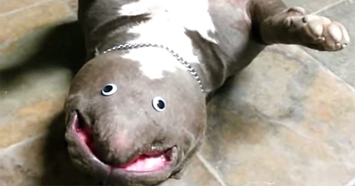 Guy 'Discovers' New Exotic Animal Species In His Living Room