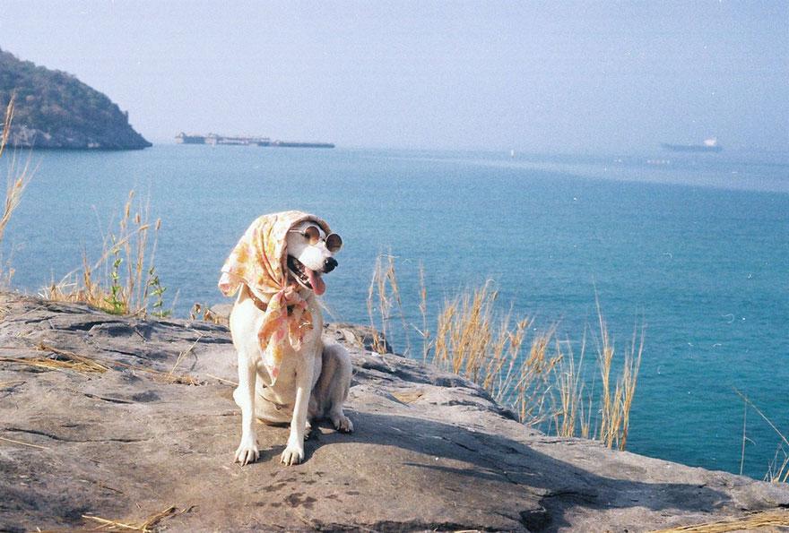 happy-dog-photography-gluta-thailand-10
