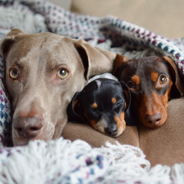 harlow-sage-indiana-reese-cute-dog-photos-10