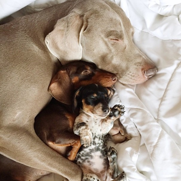 A New Puppy Joins The Adorable Doggie Duo Of Harlow & Indiana