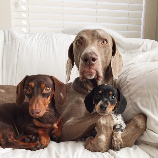 harlow-sage-indiana-reese-cute-dog-photos-18