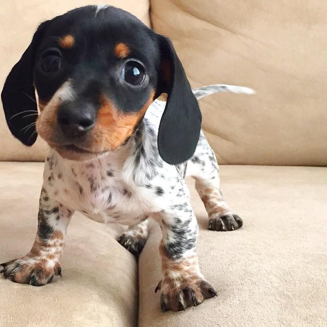 harlow-sage-indiana-reese-cute-dog-photos-22