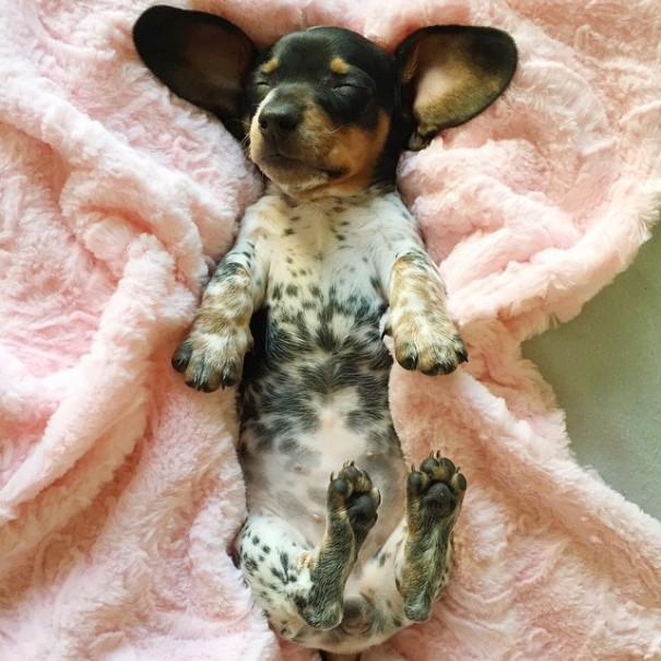 harlow-sage-indiana-reese-cute-dog-photos-7
