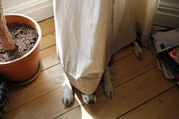 159 Dogs Who Suck At Hide And Seek Bored Panda