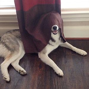 Completely Hidden Dog