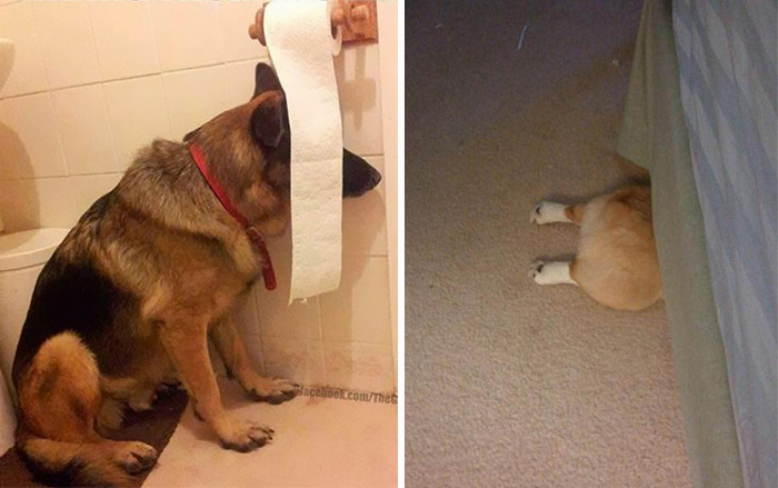 159 Dogs Who Suck At Hide-And-Seek
