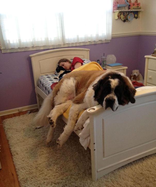 """I Think I Need A Bigger Bed"""