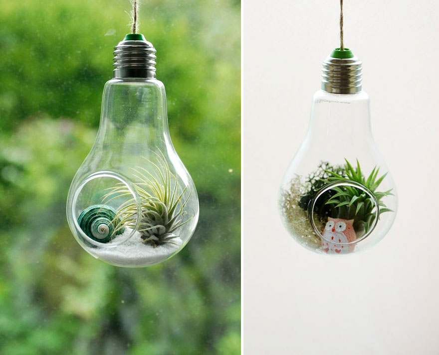 Nice #1 Air Plant Terrarium Design