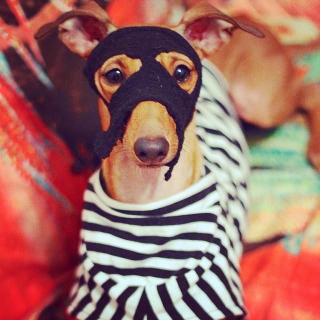 iggy-joey-stylish-dog-2