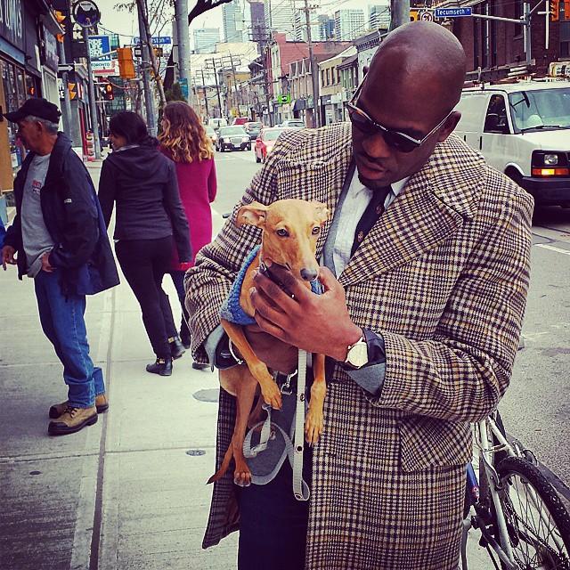 iggy-joey-stylish-dog-3