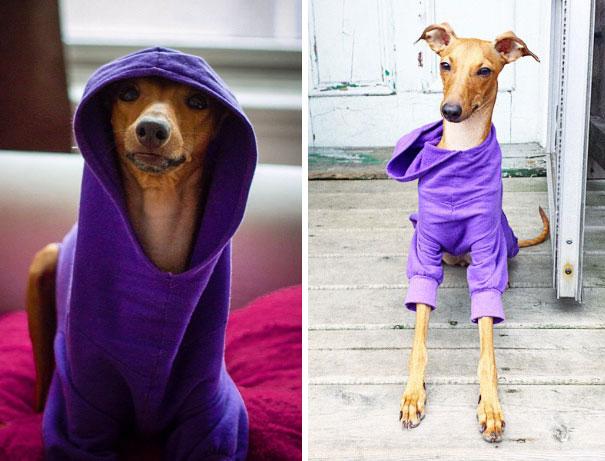 iggy-joey-stylish-dog-4
