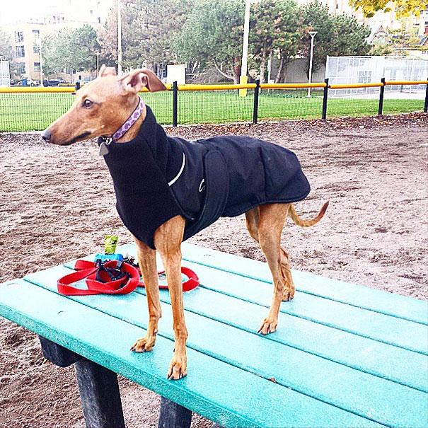 iggy-joey-stylish-dog-5