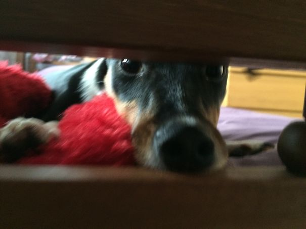 Peek-a-boo With Poppy