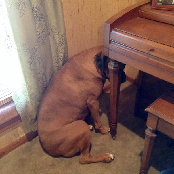 Boxer, Think Like A Piano, Be The Piano.