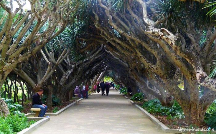 Algiers Jardin D'essai Street