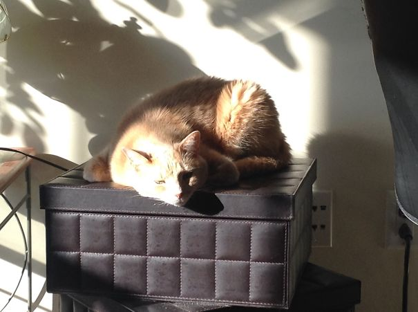 Zoe Owning The Leather Boxes :)