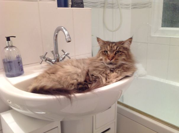 Is This Not What Sinks Are For?