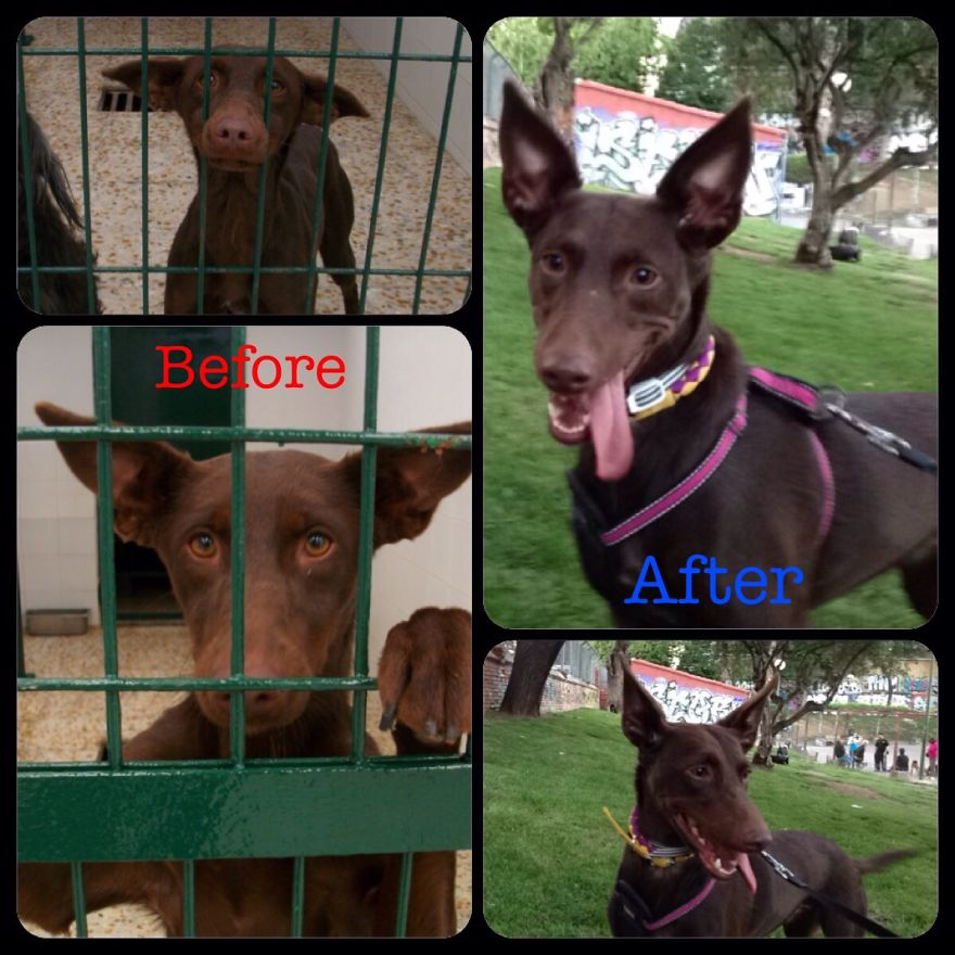 Luna In The Pound And After Adoption