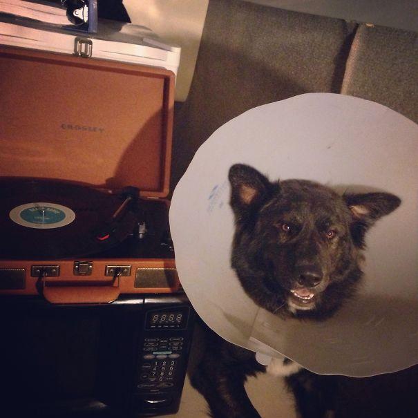 Grammaphone Cone Of Shame