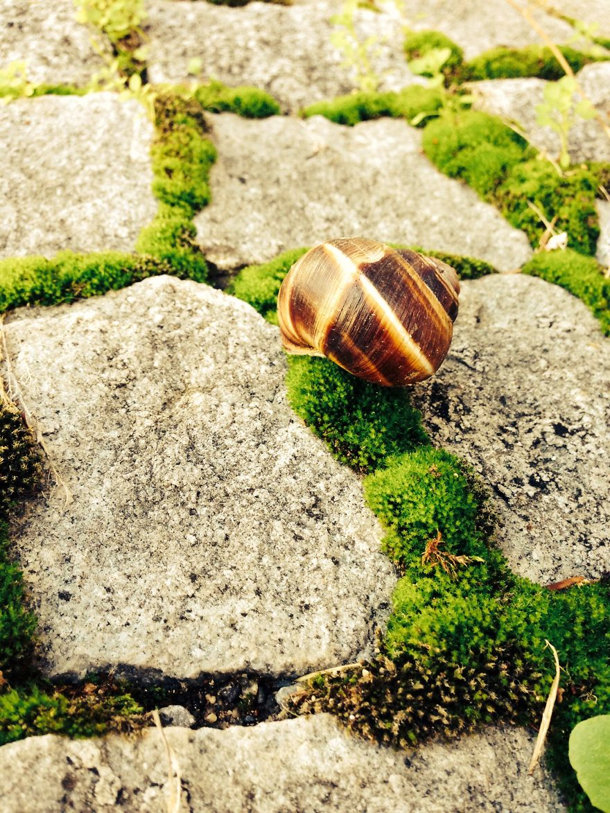 Photogenic Snail