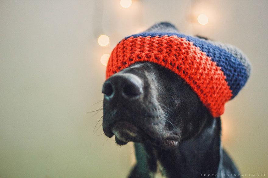 joy-dog-1