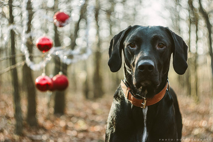 Beautiful Pictures Of Joy The Dog By Emoke Hornyak