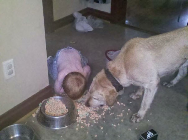 Kid Enjoying A Dogfood Bonanza