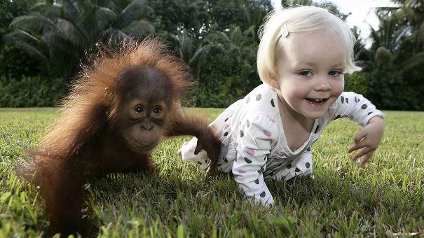 Baby Orangutan Rishi And Emily The Copycat