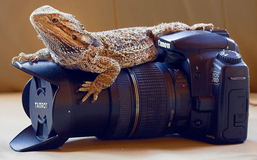 Lizard Feels Comfortable On Camera