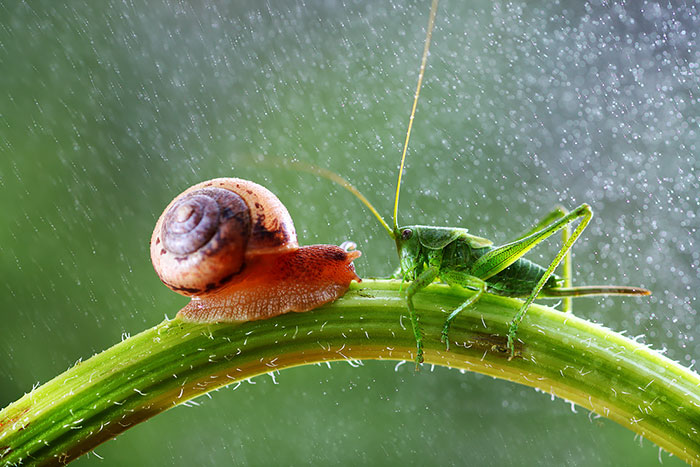 Magical Macro World Of Snails And Bugs By Vadim Trunov
