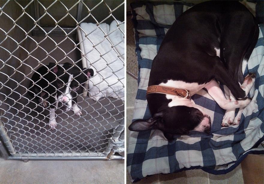 mascotas-adoptadas-antes-despues (10)