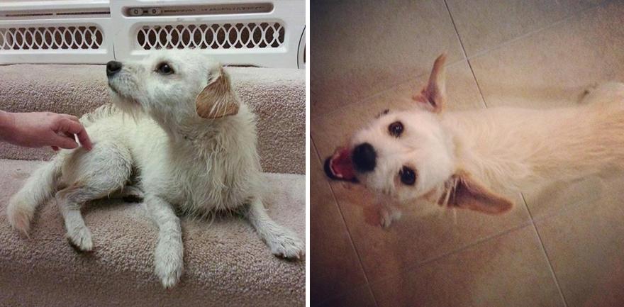 mascotas-adoptadas-antes-despues-16
