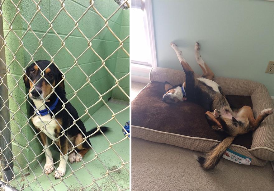 mascotas-adoptadas-antes-despues (4)