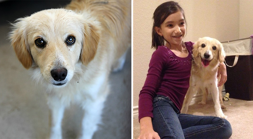 mascotas-adoptadas-antes-despues (7)
