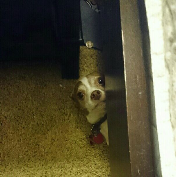Did You Look Under The Bed Yet?