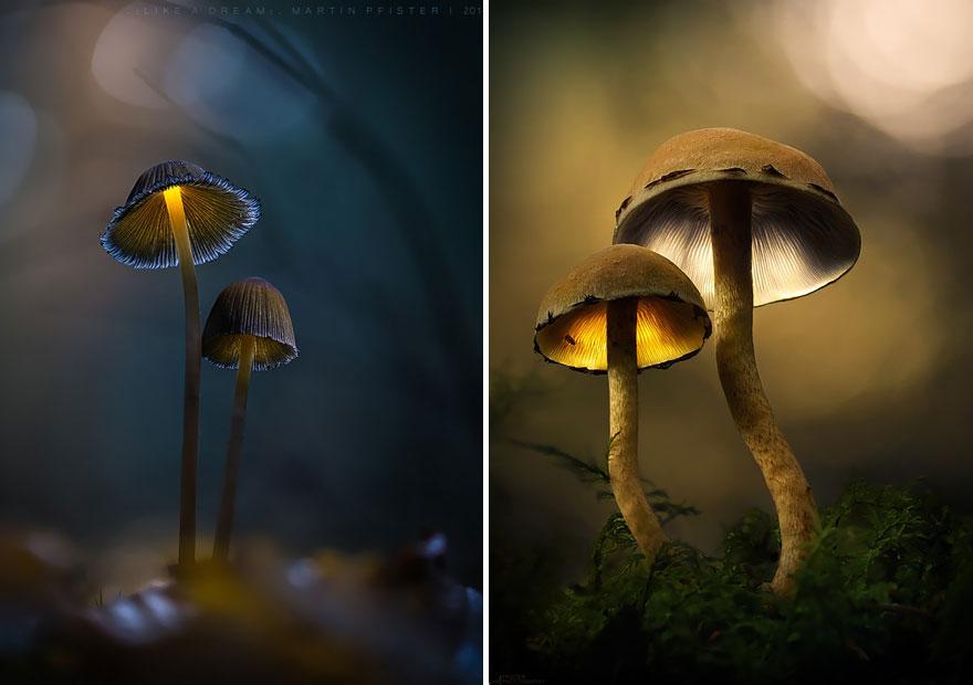 mushrooms-martin-pfister-1