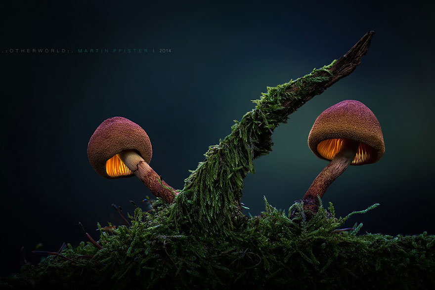 mushrooms-martin-pfister-12